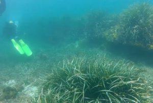 arrecife barrera
